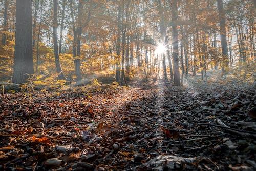 Free stock photo of dunst, Herbst, laub, Licht