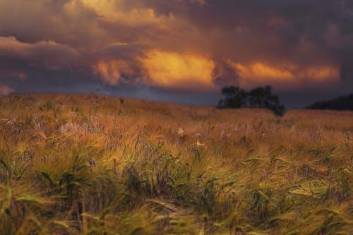 Free stock photo of feld, Landschaft, natur, sommer
