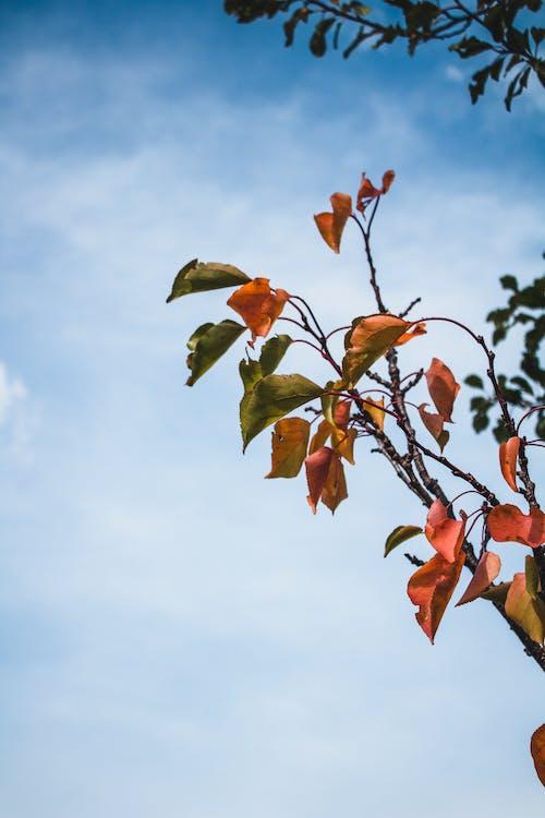 Free stock photo of autumn, autumn colors, autumn leaves