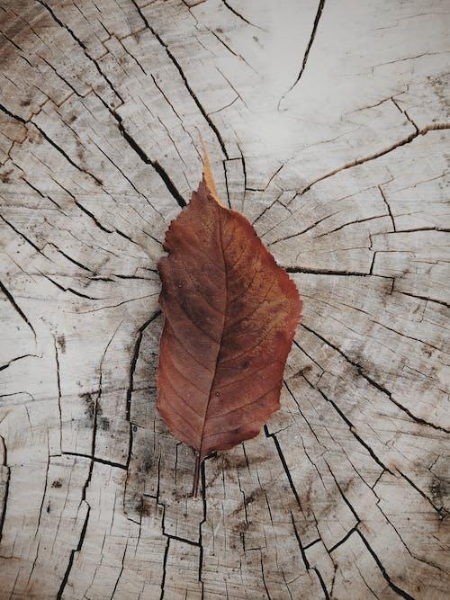 Free stock photo of autumn, autumn atmosphere, autumn colors