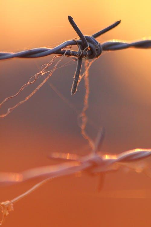 Бесплатное стоковое фото с выборочный фокус, граница, забор, закат