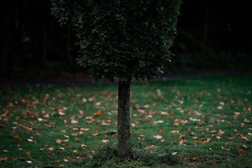Fotos de stock gratuitas de al aire libre, árbol, árbol verde