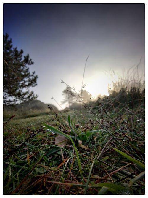 Immagine gratuita di angolo basso, bellezza della natura, bellezza nella natura, foglie verde scuro