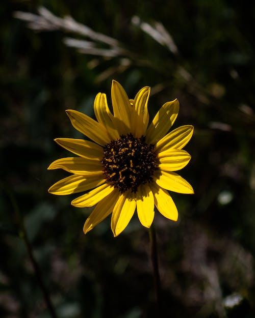 Free stock photo of beautiful flower, beautiful nature, blooming flower