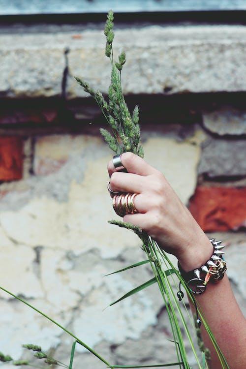Imagine de stoc gratuită din cereală, grăunte, mână