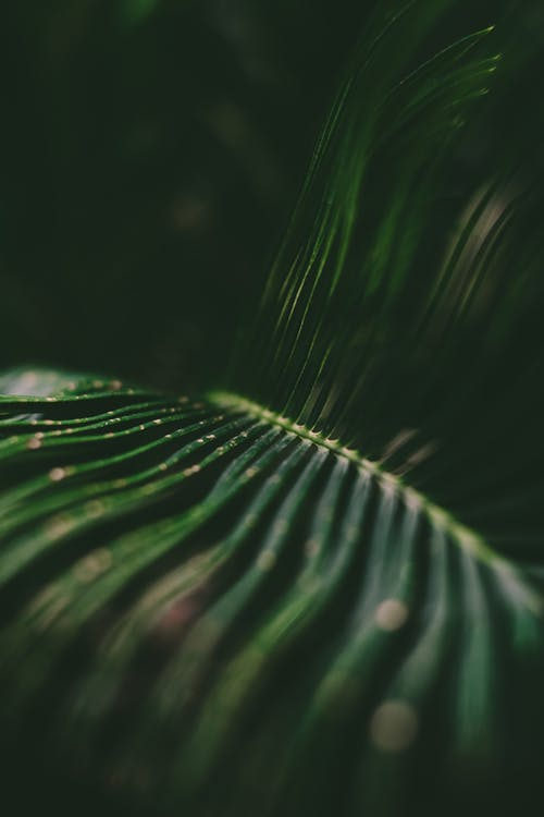 From above of green leaf of tropical plant with drops shining at bright light