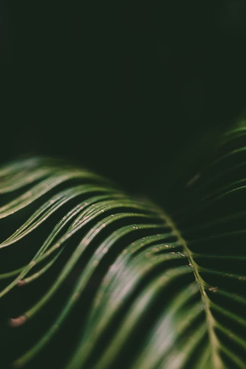 Green smooth surface of palm branch
