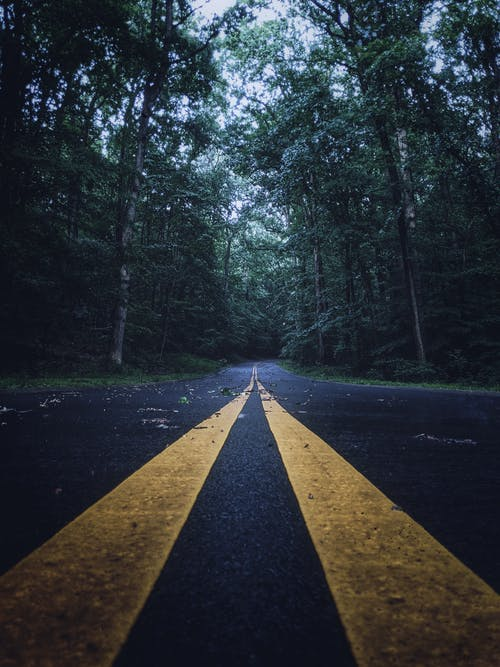 Low Angle Shot of an Asphalt Road Between Trees