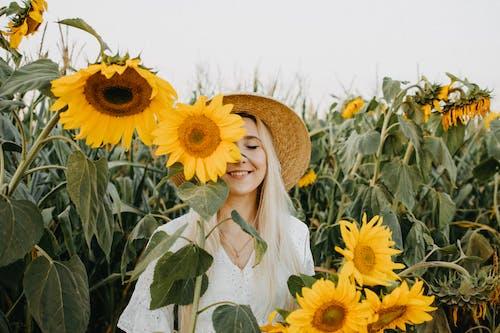 Foto profissional grátis de 4k, agricultura, amarelo