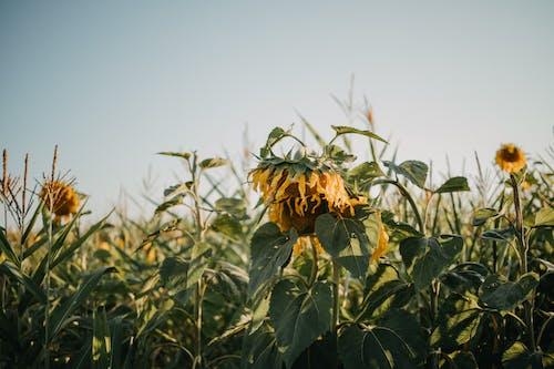 Foto stok gratis 4k, agrikultura, bidang, buket