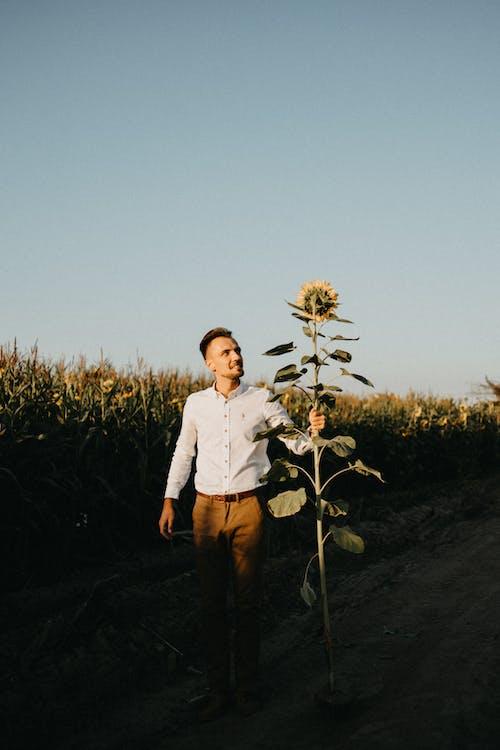 Foto stok gratis 4k, agrikultura, buket, buket bunga