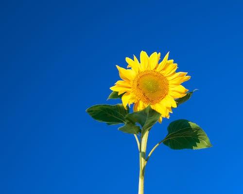 Foto stok gratis 4k, bersemangat, bidang, bunga