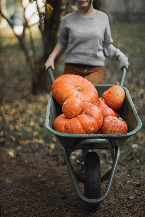 Person in Gray Long Sleeve Shirt Pushing Wheelbarrow with Pumpkins