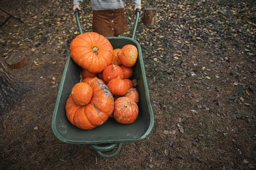 Orange Pumpkins on Green Wheelbarrow