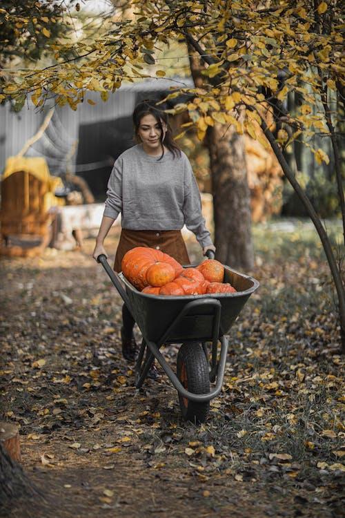 Woman in Gray Long Sleeve Shirt Pushing Wheelbarrow with Pumpkins