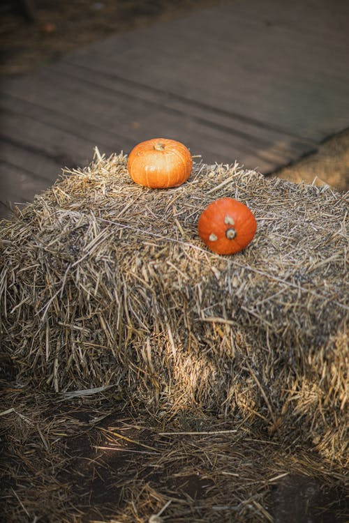 Orange Pumpkin on Brown Hay