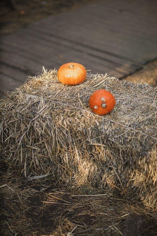 Orange Pumpkin on Brown Hay