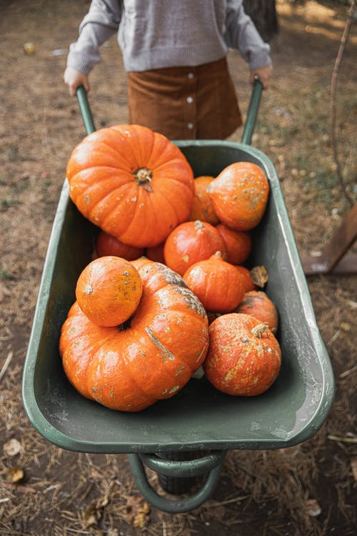 Orange Pumpkins on Green Wheelbarrow