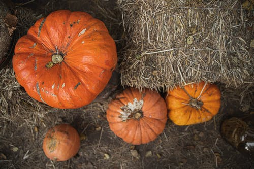 Orange Pumpkins Beside Brown Hay