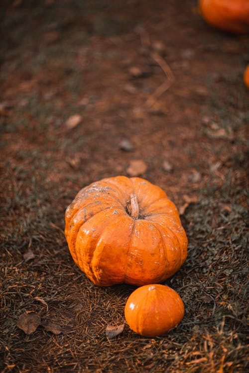 Orange Pumpkin on Brown Soil
