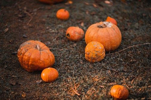 Orange Kürbisse Auf Braunem Gras