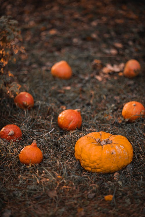 Orange Pumpkins on Brown Grass