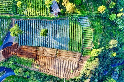 Kostenloses Stock Foto zu ackerland, agronomie, außerorts