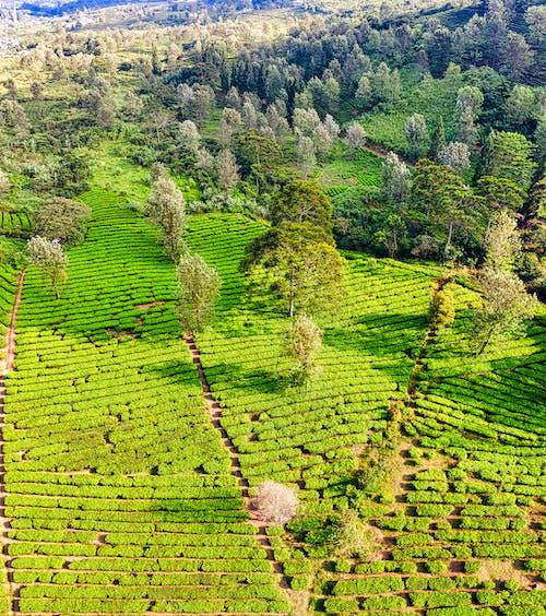 Kostenloses Stock Foto zu ackerland, agronomie, atemberaubend