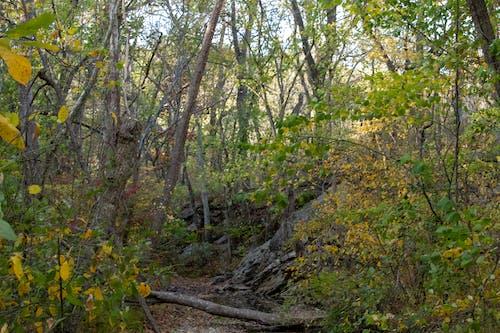 Free stock photo of creek