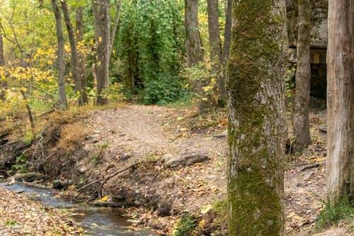 Free stock photo of hiking trail