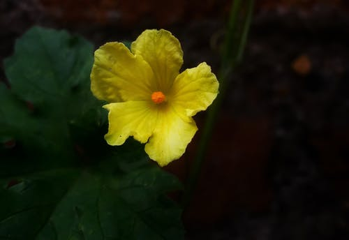 Foto stok gratis alam, bagus, bunga, bunga mekar