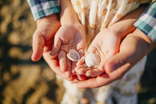 Person Holding White and Brown Seashells