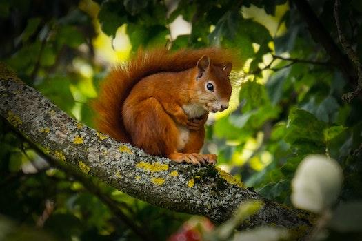 Free stock photo of nature, summer, animal, cute