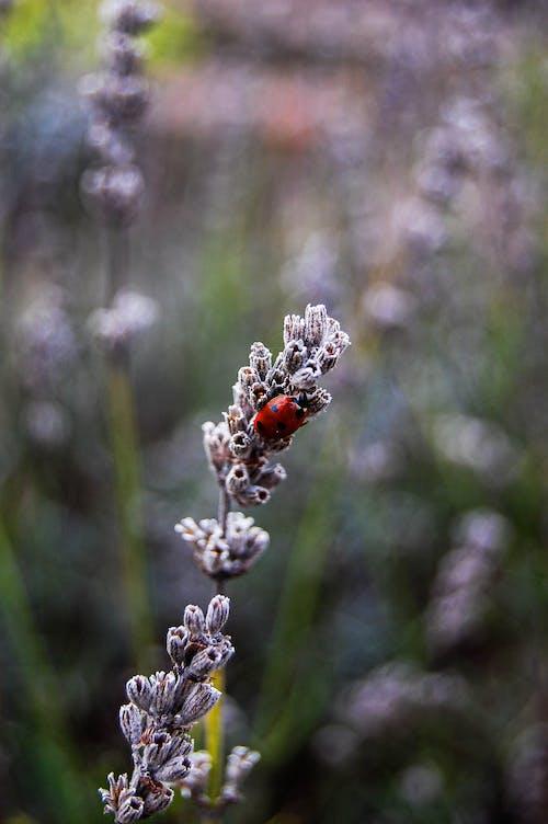 Photos gratuites de beetle, coccinelle, coléoptère