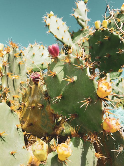 Бесплатное стоковое фото с ботанический, завод, игольчатый