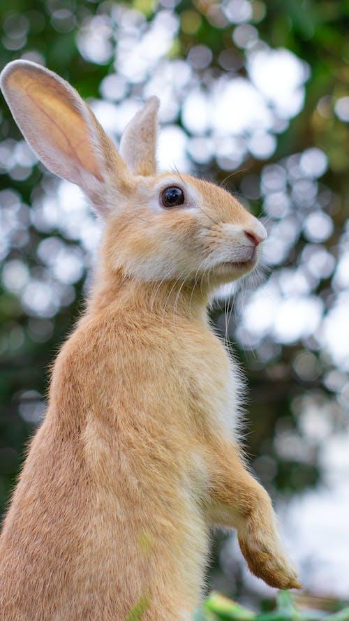 Brown Rabbit in Tilt Shift Lens