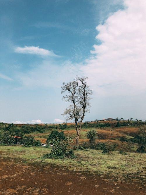 Fotobanka sbezplatnými fotkami na tému dedinský, exteriéry, hracie pole