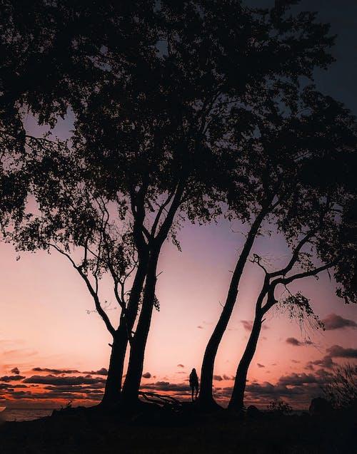 Ingyenes stockfotó arany naplemente, esés, esik, este témában