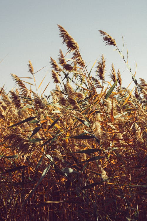 Fotos de stock gratuitas de agricultura, al aire libre, caer, caída