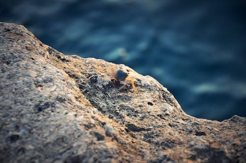 Free stock photo of blue, crab, ocean, rock