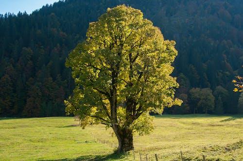 Foto stok gratis alam, bagus, bersinar, cahaya