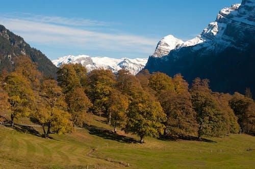 Foto stok gratis alam, alam yang indah, biru, brilian