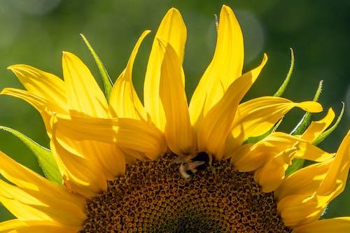 Fotobanka sbezplatnými fotkami na tému exteriéry, flóra, hmyz