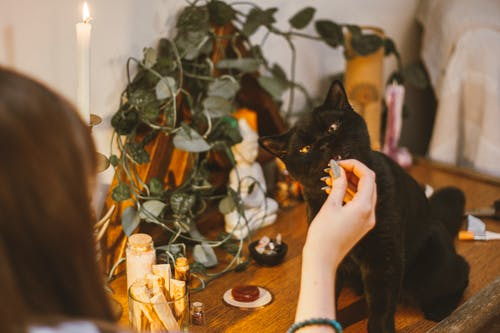 Crop woman playing with black cat on table
