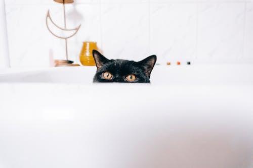 Kostnadsfri bild av bad, badkar, badrum, blick