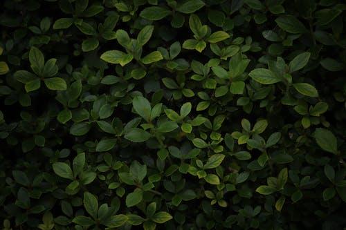 エコロジー, オーガニック, カラフルの無料の写真素材