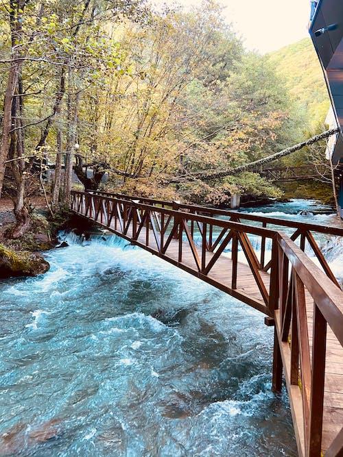 Free stock photo of bridge, lake