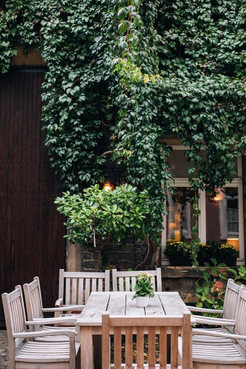 Exterior of cozy cafe with wooden table and chairs on street and green lush plant on wall