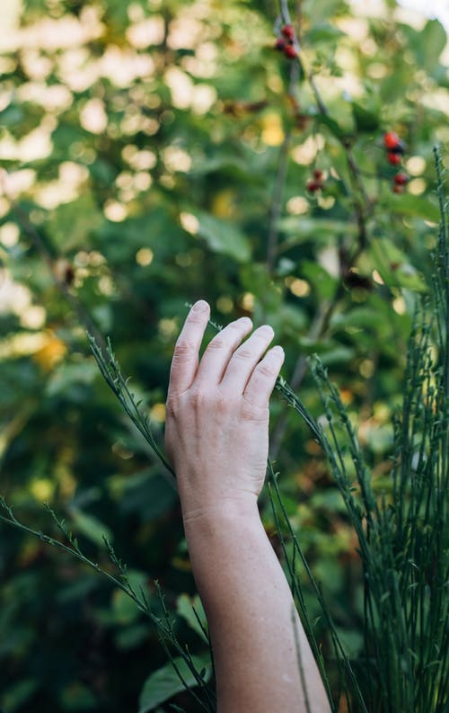 Crop person hand in green garden