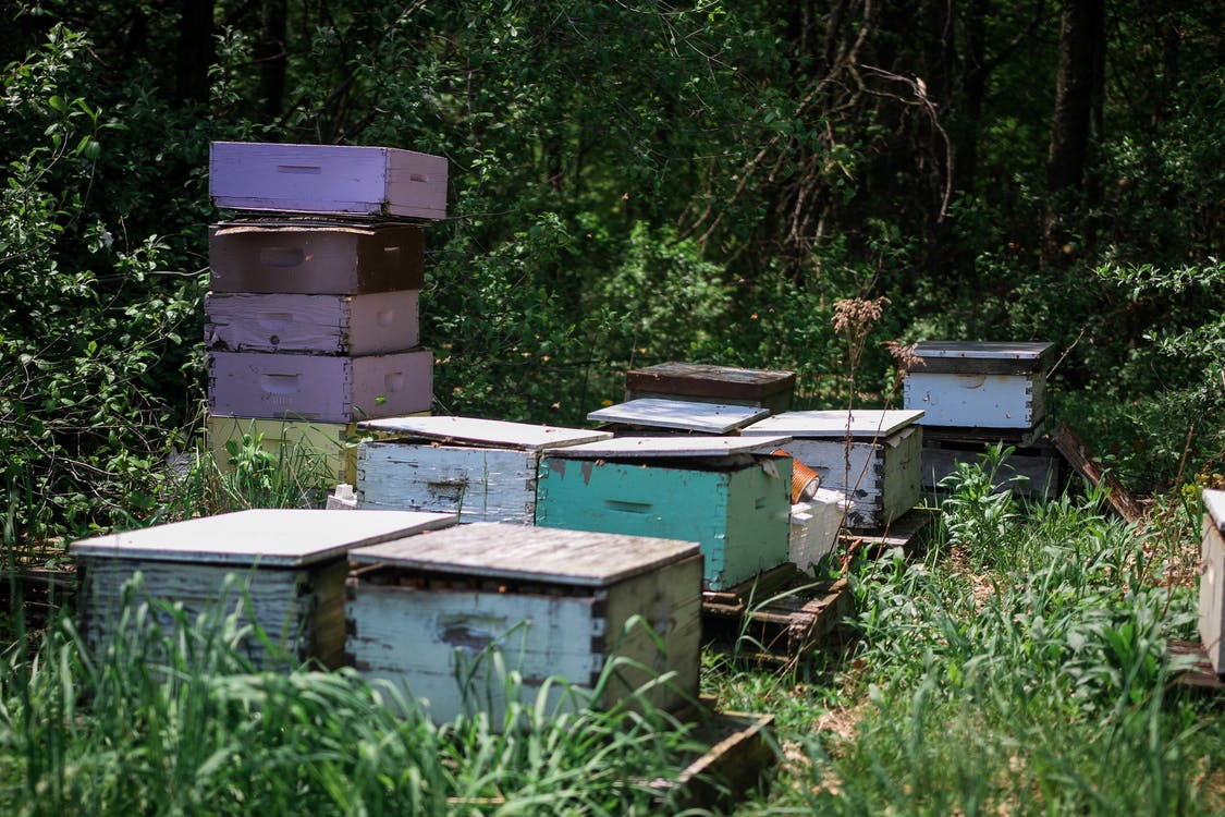 Green rural lawn with wooden boxes for bees collecting honey on beekeeping farm